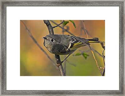 Framed Print featuring the photograph Curiosity by Gary Holmes