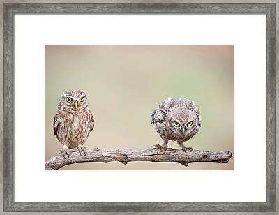 Curiosity Of Chick Framed Print
