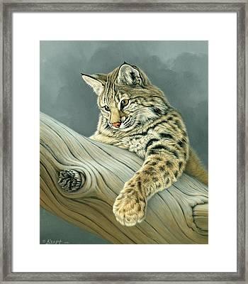 Curiosity - Young Bobcat Framed Print