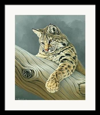 Bobcat Kittens Framed Prints