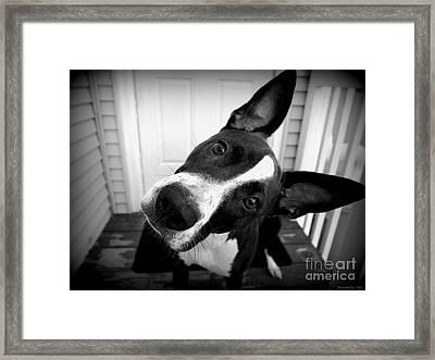 Curious Abby Framed Print