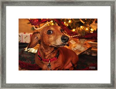 Curious About Christmas Framed Print