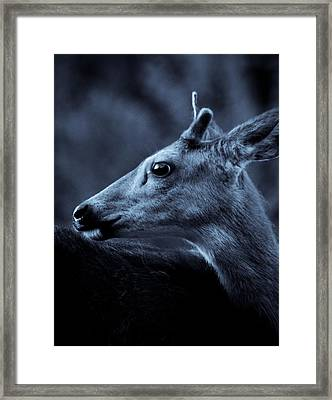 Framed Print featuring the photograph Curious  by Adria Trail