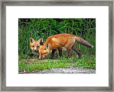 Curious And Sniffy Framed Print by Steve Harrington