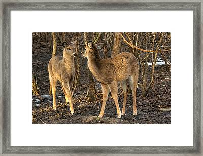 Curious Attraction   Framed Print by James Marvin Phelps