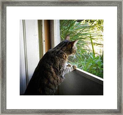 Curious Cat Framed Print by Christy Usilton