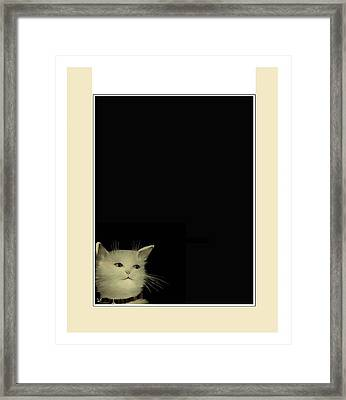 Curious Cat Framed Print by Diane Strain