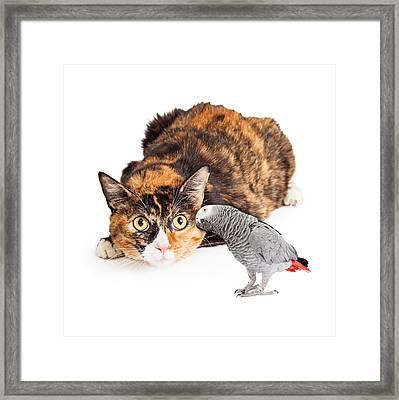 Curious Cat Looking At Bird Framed Print