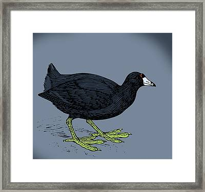 Curious Coot Framed Print by Viv Griffiths