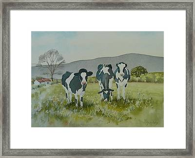 Framed Print featuring the painting Curious Cows by Jo Appleby