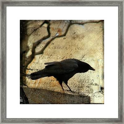 Curious Crow Framed Print