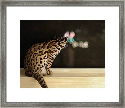 Curious Cub Framed Print
