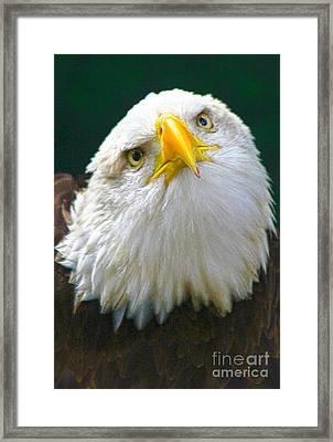Curious Eagle Framed Print