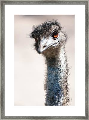Curious Emu Framed Print