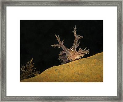 Curious. Framed Print