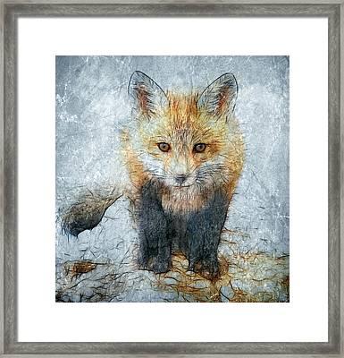Curious Fox Framed Print by Steve Barge