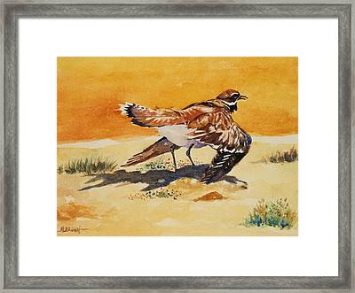Framed Print featuring the painting Curious Killdeer by Al Brown