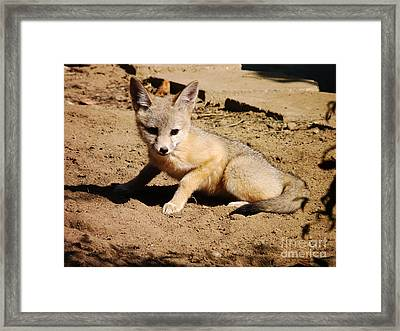 Curious Kit Fox Framed Print