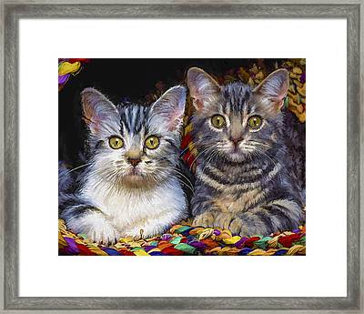 Curious Kitties Framed Print by David Wagner