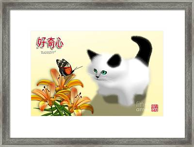 Curious Kitty And Butterfly Framed Print