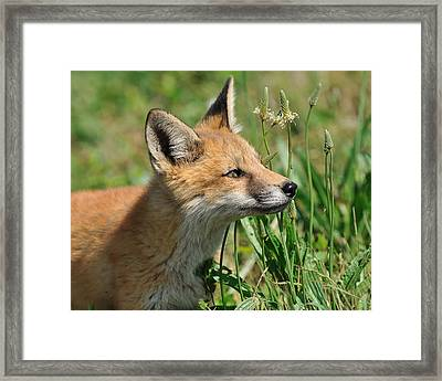 Curious Kitty Framed Print by Angel Cher