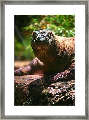 Curious Komodo Framed Print