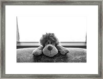 Curious Leo Framed Print