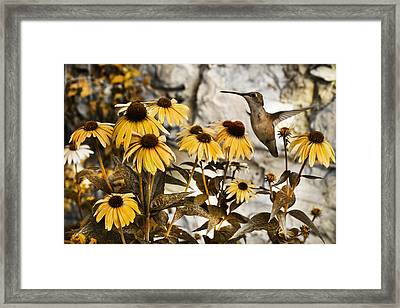 Curious One  Framed Print
