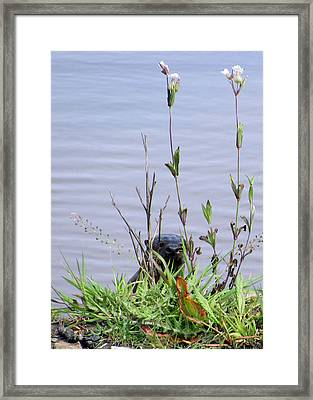 Framed Print featuring the photograph Curious Otter by I'ina Van Lawick