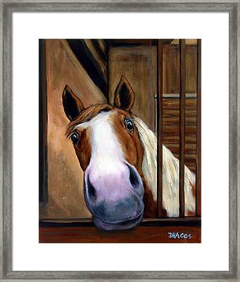 Curious Paint Horse Framed Print by Dottie Dracos