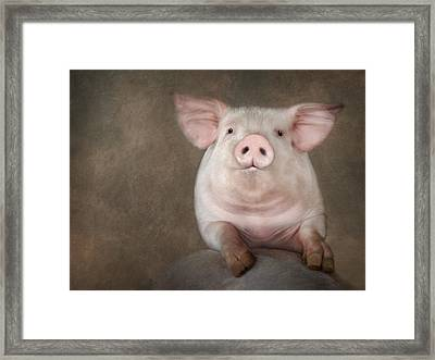 Curious Pig Framed Print by Lori Deiter