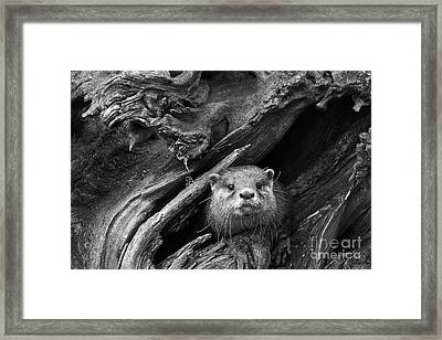 Framed Print featuring the photograph Curious River Otter by Inge Riis McDonald