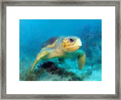 Curious Sea Turtle Framed Print by David  Van Hulst