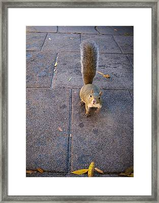 Curious Squirrel Framed Print by Michele Stoehr