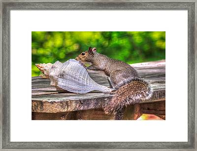 Framed Print featuring the photograph Curious Squirrel by Rob Sellers