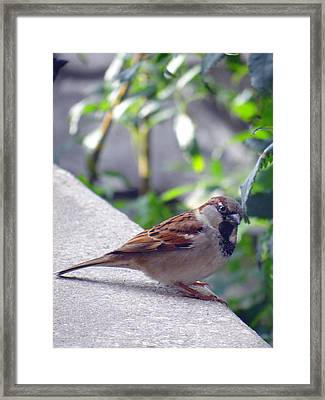 Framed Print featuring the photograph Curious by Tom DiFrancesca