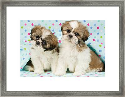 Curious Twins Framed Print
