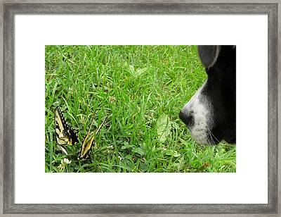 Curiousity Got Me Framed Print by Kim Galluzzo Wozniak