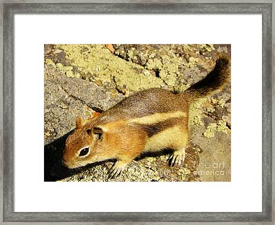 Curiousity Framed Print by Michelle Bentham