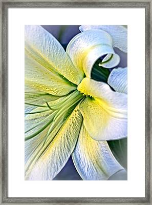 Curl Of A Lily Framed Print