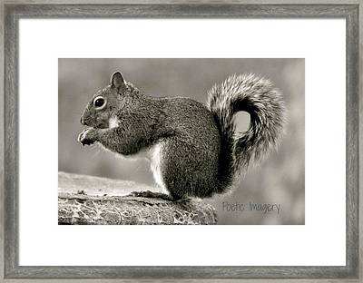 Curled  Framed Print by Debbie Sikes