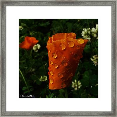 Curled Drops Framed Print by Barbara St Jean