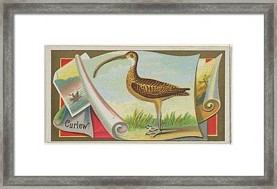 Curlew, From The Game Birds Series N13 Framed Print by Issued by Allen & Ginter