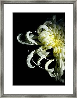 Curling Mum Framed Print
