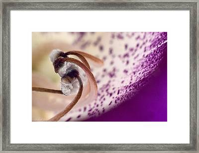 Framed Print featuring the photograph Curling Puff Balls by Robert Culver