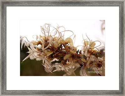 Curlleaf Mountain Mahogany Framed Print
