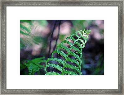 Curls Framed Print by Debbie Oppermann