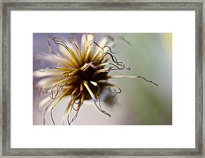 Curls Framed Print by Tracy Male