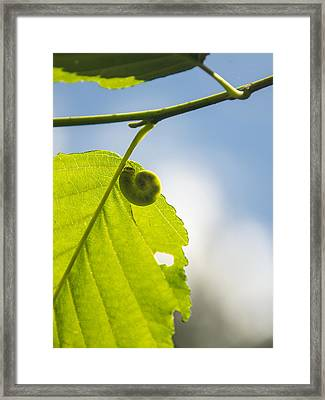 Curly Cute Framed Print