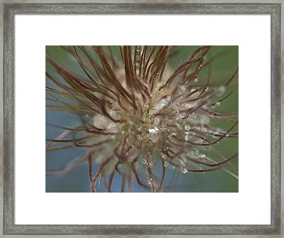 Curly Flower Framed Print by Sarah Crites